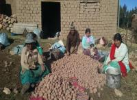 Primitiva and Her Family With the Potato Harvest